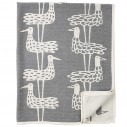 Shorebirds grey